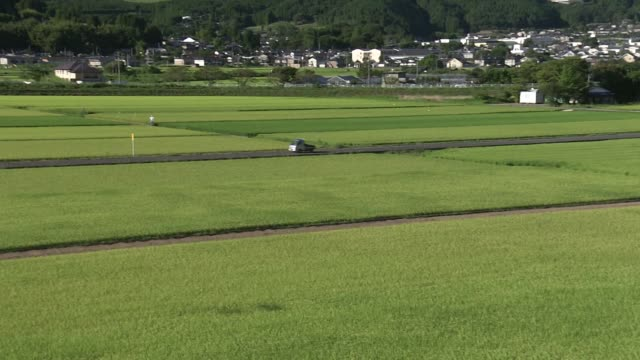 green rice fields in yufu city, oita, japan - oita city stock videos & royalty-free footage