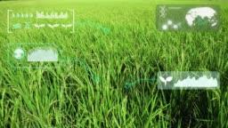 Green rice organic smart farm