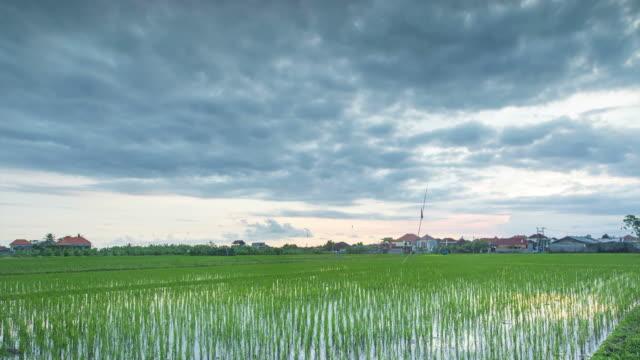 Grüne Reisfeld in Canggu Gegend von Bali