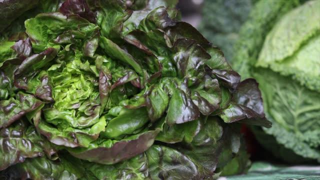 vidéos et rushes de green salad - salade verte