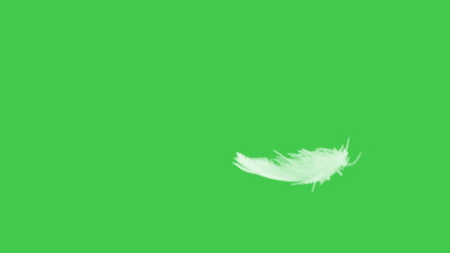 green screen feather flying slow motion close up. - feather stock videos & royalty-free footage
