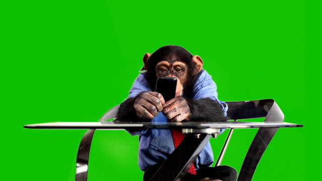 grünen bildschirm monkey smart phone - alphachannel stock-videos und b-roll-filmmaterial