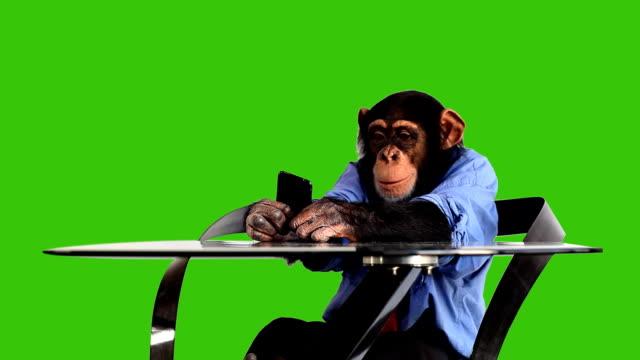 Grünen Bildschirm Monkey Smart Phone