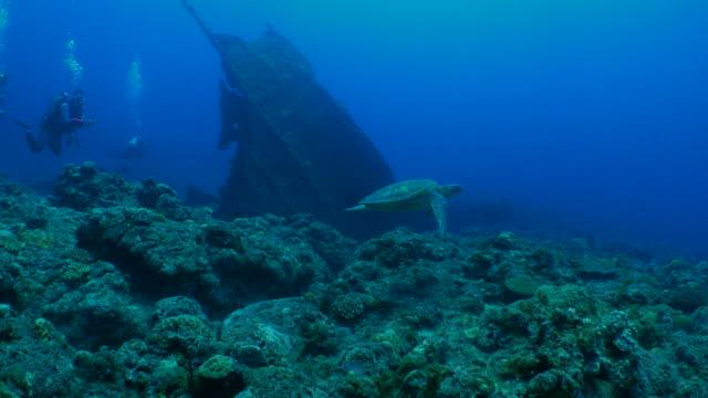 stockvideo's en b-roll-footage met groene zeeschildpad zwemmen op koraalrif - scheepswrak