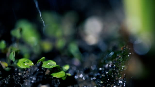 green seedling growing on the ground in the rain - watering can stock videos and b-roll footage