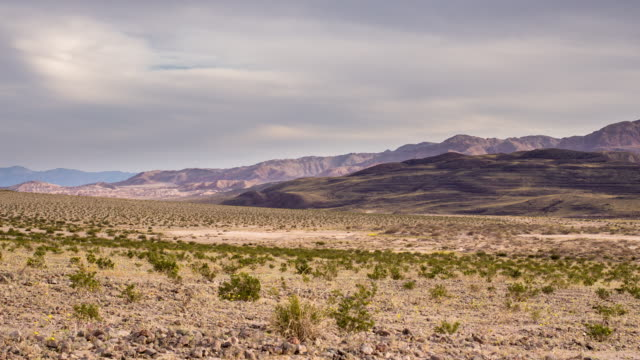 green shrubs in the desert - time lapse - death valley national park stock videos & royalty-free footage