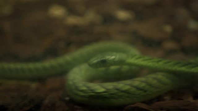 grüne schlange im aquarium - mariner lebensraum stock-videos und b-roll-filmmaterial