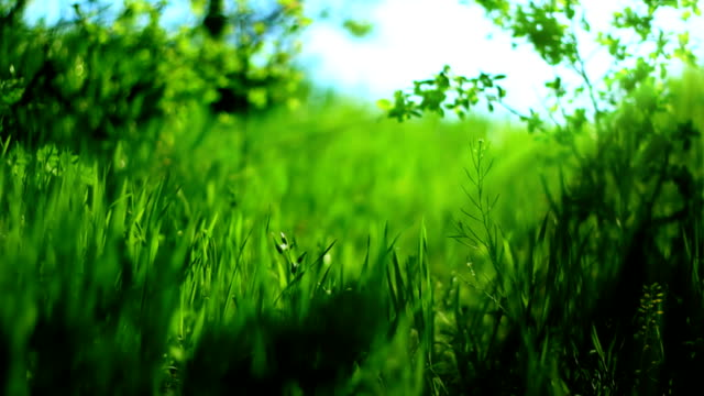 green spring backround (loopable) - softfokus bildbanksvideor och videomaterial från bakom kulisserna
