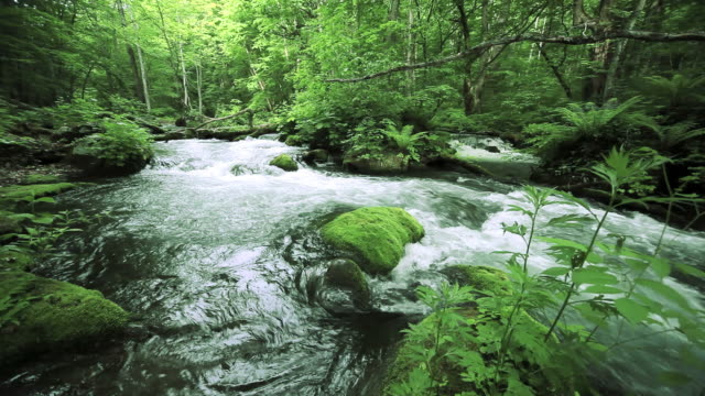 green stream. - springtime stock videos and b-roll footage
