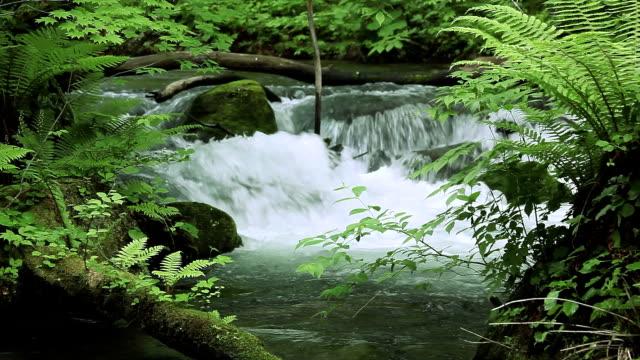 Vert stream.