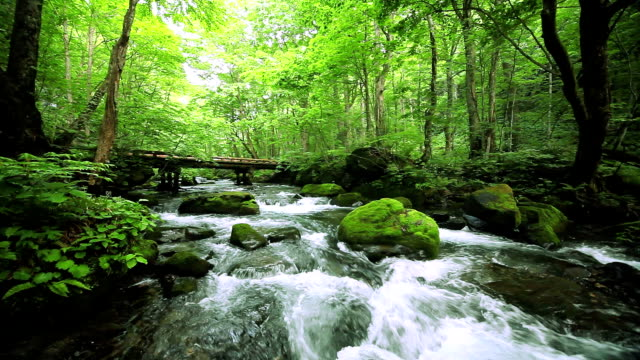 green stream. - spring flowing water stock-videos und b-roll-filmmaterial