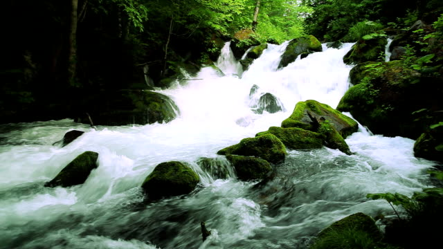 green stream. - river stock videos & royalty-free footage