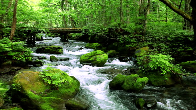 green stream. - spring flowing water stock videos & royalty-free footage