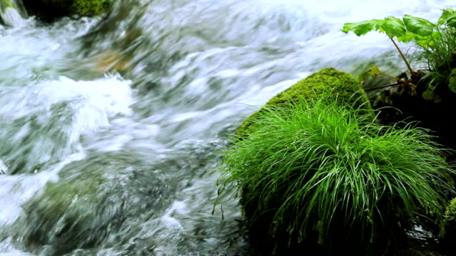 green stream. - aomori prefecture stock videos & royalty-free footage