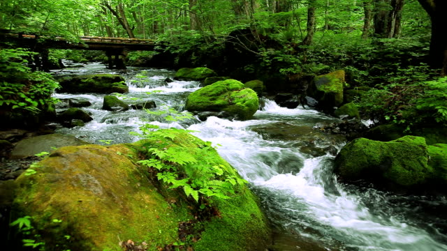 green stream. - moss stock videos & royalty-free footage