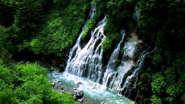 vídeos y material grabado en eventos de stock de verde corriente. - belleza natural
