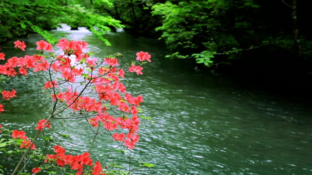 green stream. - cascade range stock videos & royalty-free footage