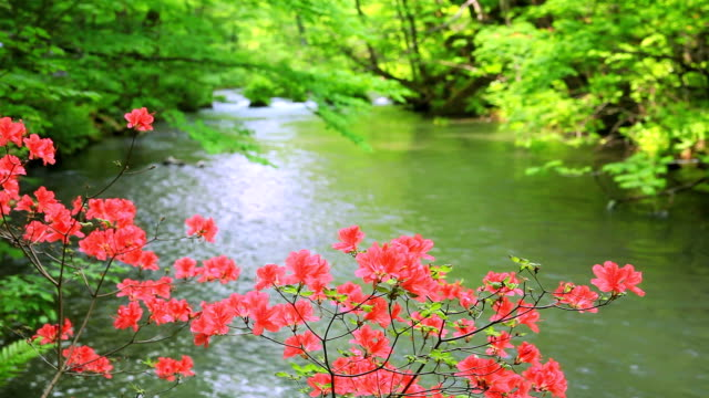green stream with red flower - plusphoto stock videos & royalty-free footage