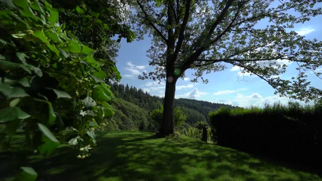 a green summer garden, trees and a hill that descends to sun-drenched vineyards. - drenched stock videos & royalty-free footage