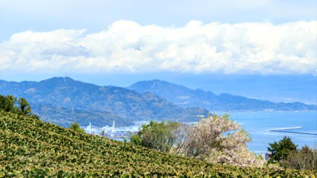 green tea farm with mt fui background view from nihondaira, shizuoka prefecture - shizuoka prefecture stock videos and b-roll footage
