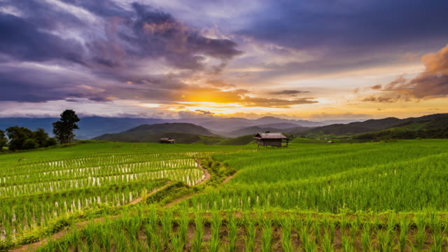 Rizière en Pa Pong Pieng, Mae Chaem, Chiang Mai, Thailand Time Lapse jour au coucher du soleil en terrasse vert.