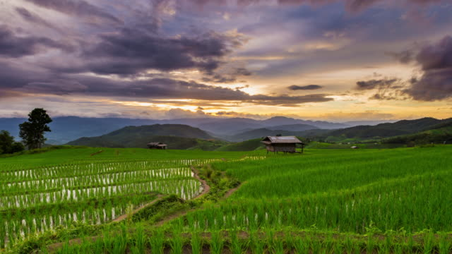 Green Terraced Rice Field in Pa Pong Pieng , Mae Chaem, Chiang Mai, Thailand Time Lapse Day to Sunset.