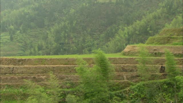 ms green terraced rice fields on hillside, guilin, guangxi zhuang autonomous region, china - guangxi zhuang autonomous region china stock videos & royalty-free footage
