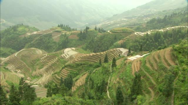 ws ha pan green terraced rice fields on hillside, guilin, guangxi zhuang autonomous region, china - guangxi zhuang autonomous region china stock videos & royalty-free footage