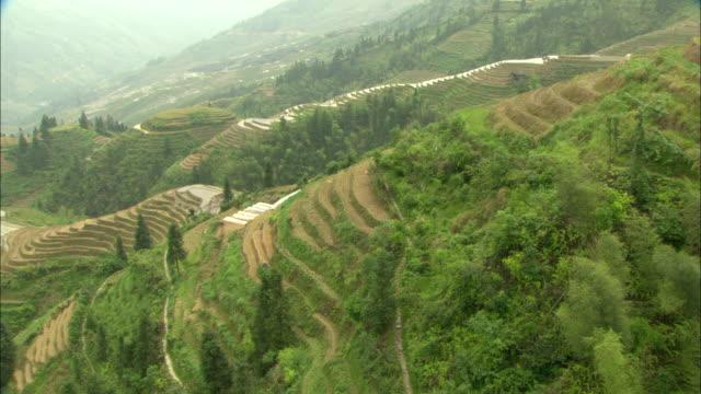 ws ha tu green terraced rice fields on hillside, guilin, guangxi zhuang autonomous region, china - guangxi zhuang autonomous region china stock videos & royalty-free footage
