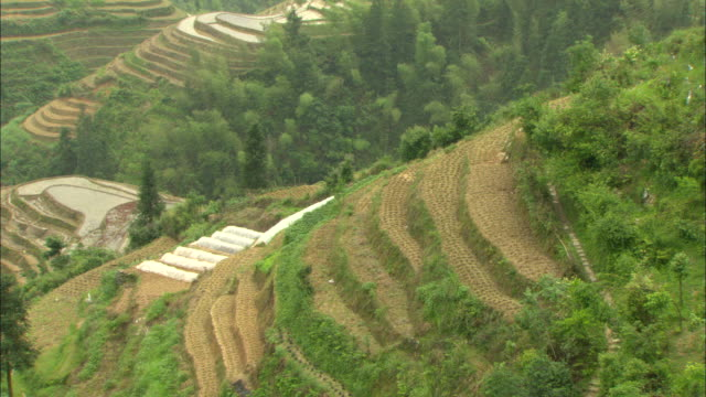 ms ha green terraced rice fields on hillside, guilin, guangxi zhuang autonomous region, china - guangxi zhuang autonomous region china stock videos & royalty-free footage