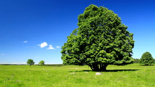 Green tree and blue sky-HD