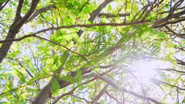 Green tree in Australia