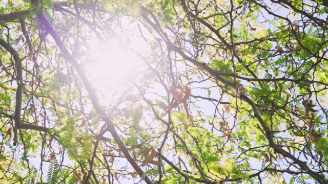 green tree in australia - directly below stock videos & royalty-free footage