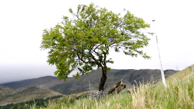 vídeos de stock, filmes e b-roll de árvore verde em dia de vento - filme documentário