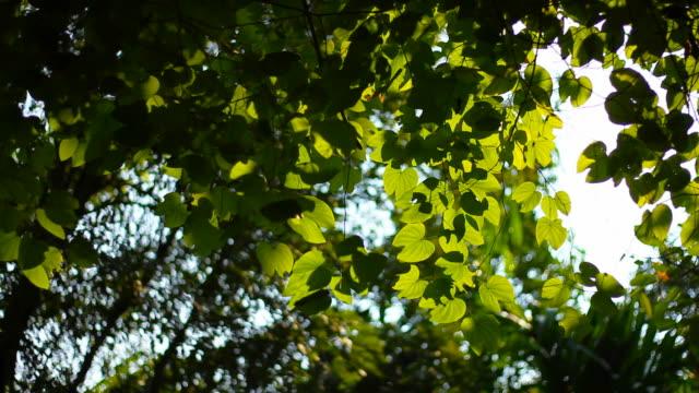 Green Tree Leaf in the garden