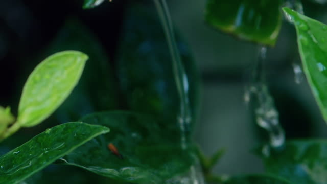 green tree leaf soaking with water. - raindrop stock videos & royalty-free footage