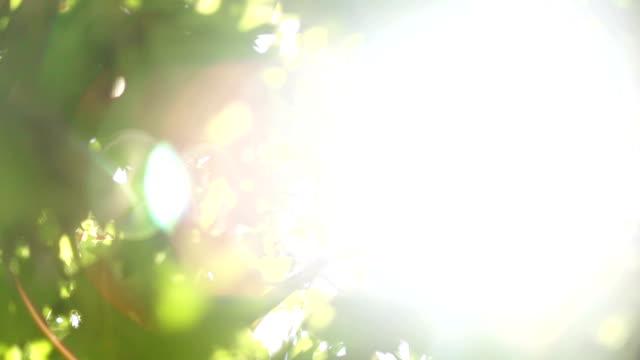 グリーンの樹木の葉 - 中東点の映像素材/bロール