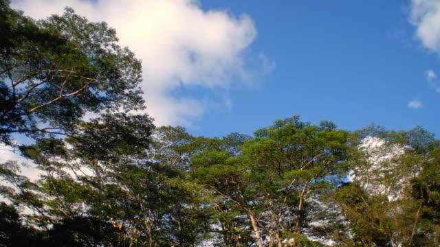 t/l ws la green tree tops against blue sky / provo, utah, usa - provo bildbanksvideor och videomaterial från bakom kulisserna
