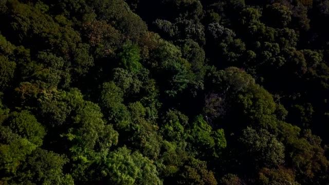 green tree tops - ニューヘイブン点の映像素材/bロール