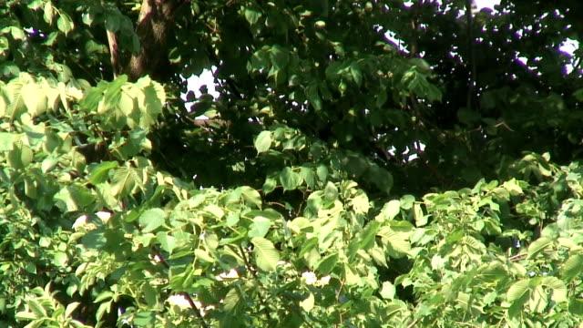 green trees  1080/60i - mindre än 10 sekunder bildbanksvideor och videomaterial från bakom kulisserna