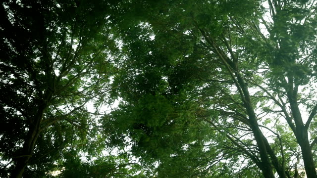 green trees bend in storm - natural disaster stock videos & royalty-free footage