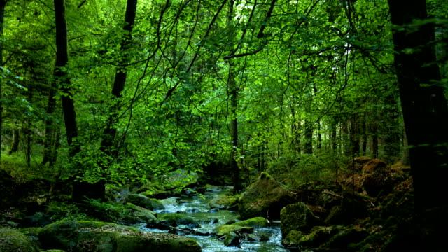 vídeos de stock, filmes e b-roll de árvores verdes com floresta creek dolly foto (4 km/uhd para hd) - floresta da bavária