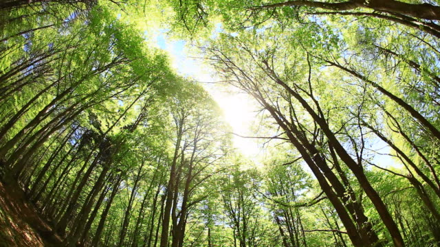 green trees in spring, 360 degree camera spin, hd video - directly below stock videos & royalty-free footage