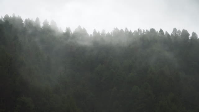 green trees in the misty forest - natural pattern stock videos & royalty-free footage