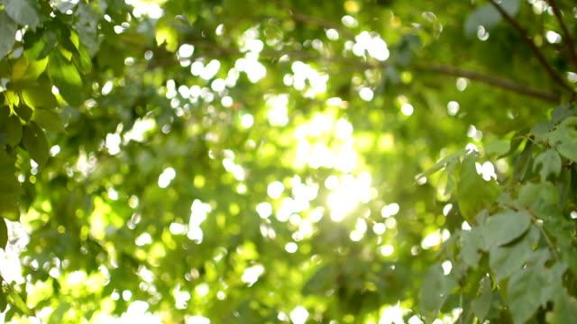 緑の木々 - 木漏れ日点の映像素材/bロール