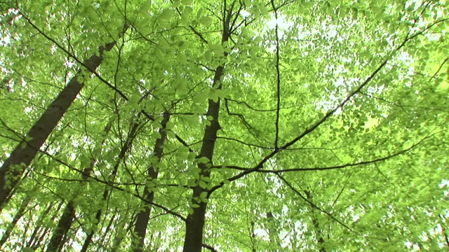 hd: green treetops - deciduous stock videos & royalty-free footage