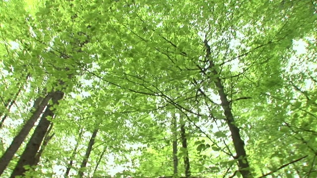hd: green treetops - deciduous tree stock videos & royalty-free footage
