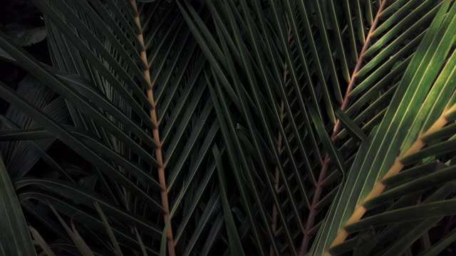 green tropical leaves - palm leaf stock videos & royalty-free footage