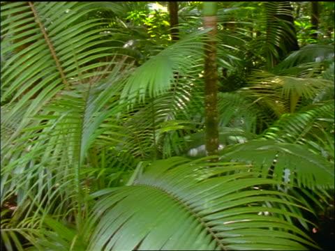 vidéos et rushes de pan green tropical plants in forest / hawaii - angle de prise de vue