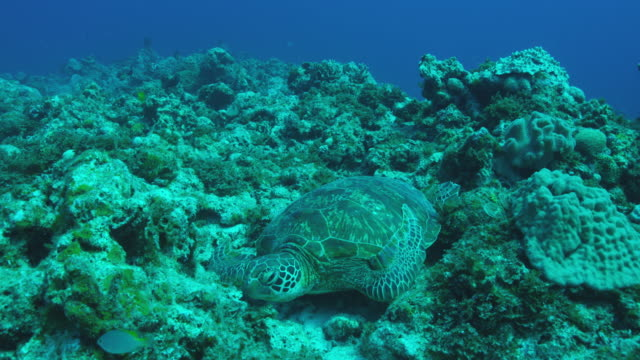 Green turtle and Sea snake